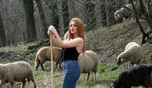 Mädchen, Schaf, Herde, Camacho, Sinnlich