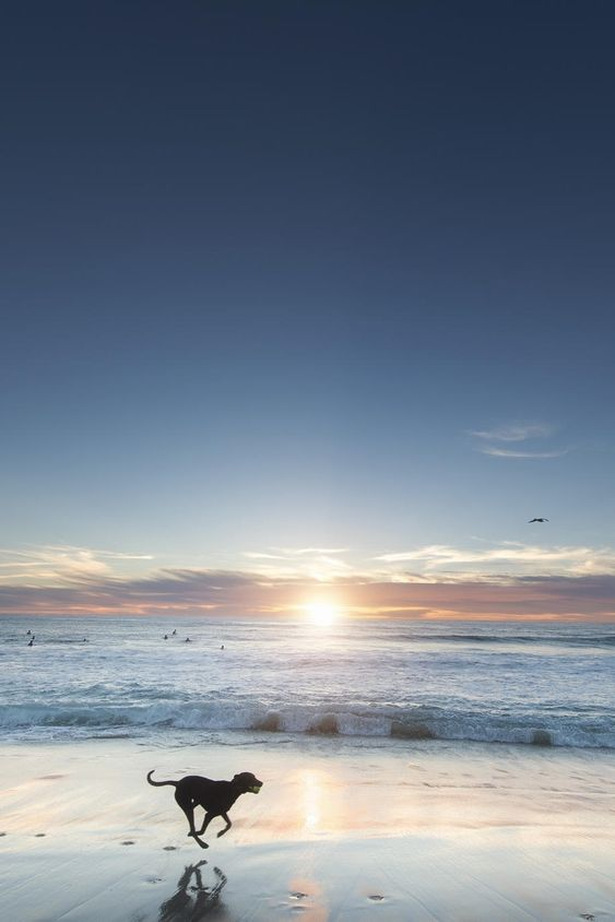 浜辺を走るおしゃれでかっこいい犬の壁紙