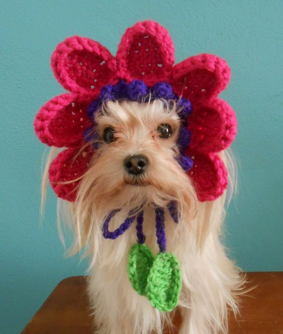 Crocheted Flower Hat for Cat or Dog, Pink and Purple Flower Hat for Pet, Spring Flower Pet Hat