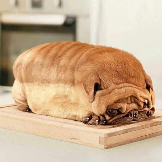 dog that looks like a loaf of bread