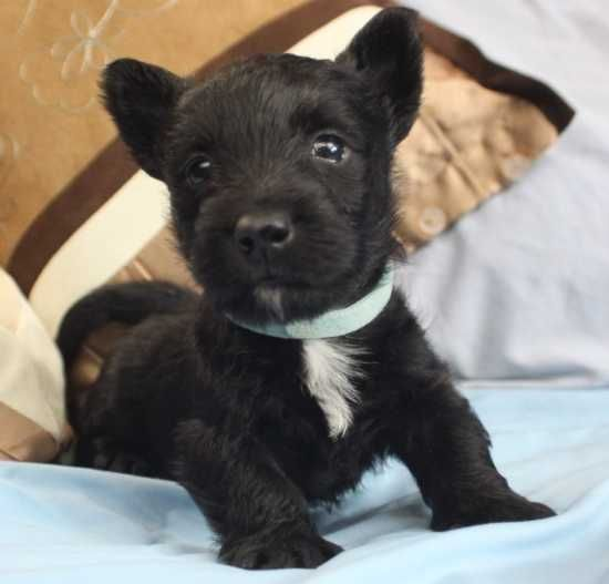 Dogs Puppies For Sale In Saint Paul Minnesota In 2020 Dogs For Sale Puppies For Sale Dogs And Puppies