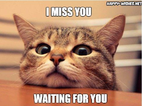 20 Super Cute Memes That Say I Miss You Sayingimages Com Cats Cute Animals Animals