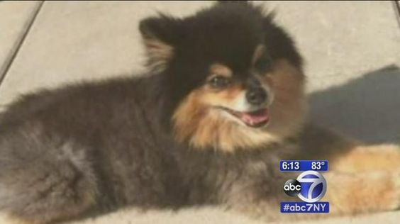 PRAYERS PLEASE FOR DOG WATCH: Dog-napping caught on surveillance in Williamsburg