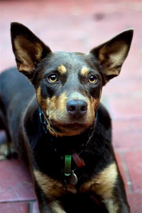 Custom essay service dogs