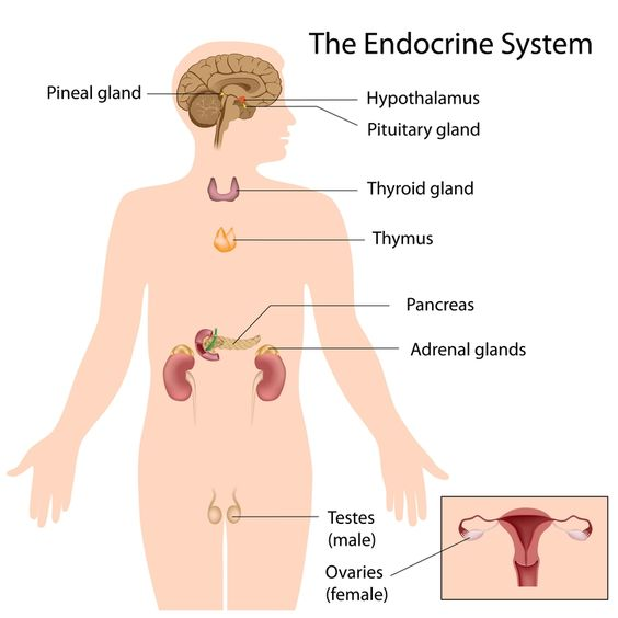 Endocrine system, The o'jays and Photos on Pinterest