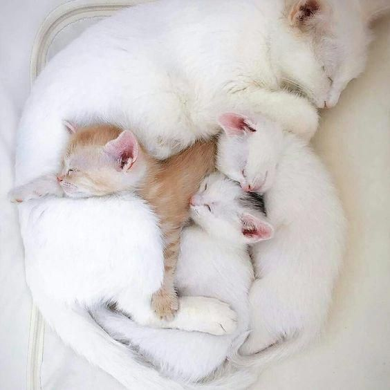 Cat Kittens Happykitten Cats Brownkitten Cats Cutecats Cat