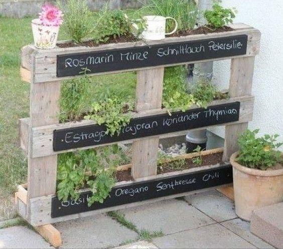 Des plants d'herbes aromatiques sur une terrasse.  Nul besoin d'avoir un  jardin pour cultiver ces aromates...