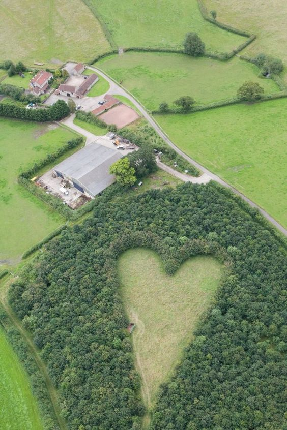 """""""After the sudden death of Janet, his beloved wife of 33 years, Winston Howes, a British farmer, wanted a space to remember her. So in a flash of inspiration, he planted 6,000 oak trees in a nearby field, carefully planting them in the shape of a heart."""" Hot-air balloonist Andy Collett chanced upon the hidden tribute 17 years later. Replying to a reporter's inquiry, Howe says it's """"a lovely & lasting tribute to her which will be here for years."""" Daffodils bloom in the middle each spring."""