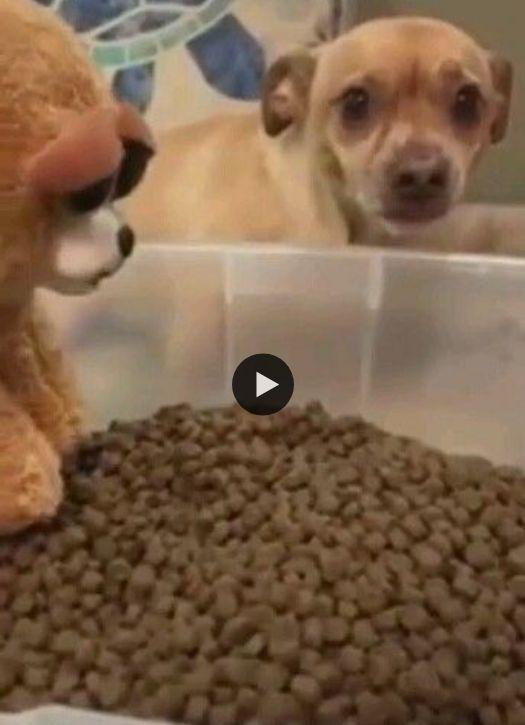 Quando o assunto é dividir a ração esse cãozinho fica logo tenso