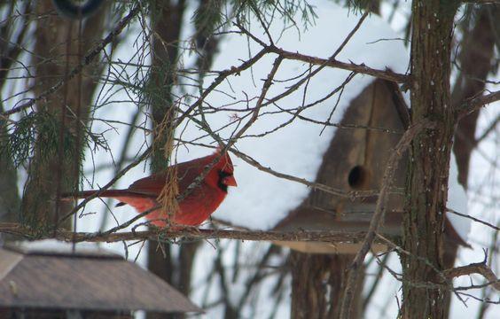 JacobsOutdoor-Cardinal