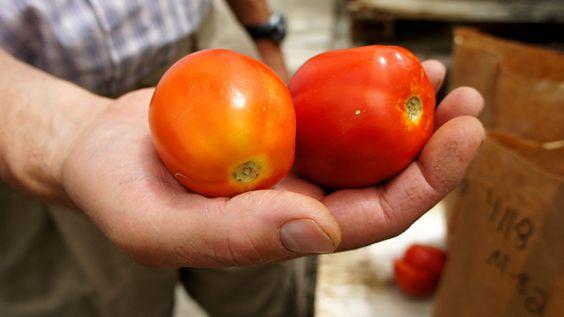 science health supermarket tomatoes taste