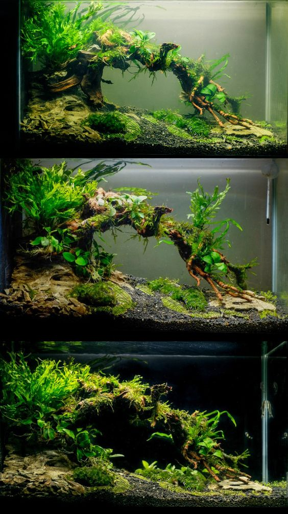 Aquascaping aquarium and tanks on pinterest for Planted tank fish