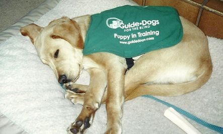It's International Assistance Dog Week. According to the IADW website, the week was created to recognize all the devoted, hardworking assistance dogs helping individuals mitigate their disability-related limitations.