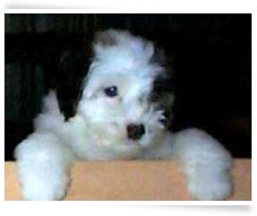 great site with all kinds of articles about dog health, including natural remedies