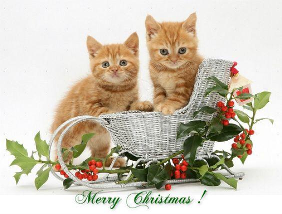 merry christmas darling piano sheet