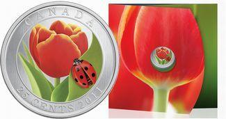 Canadian Tulip w/ Ladybug 25 Cents Crown-Size Colorized Quarter Specimen MX