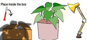 Science Projects - Plants Help Keep a House Cool