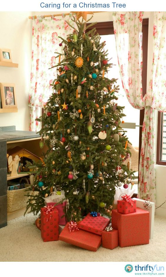Pin On Caring For Your Fresh Cut Christmas Tree