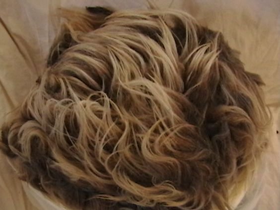 """navajo churro sheep wool.  Hesta - Jasper June 2012 Another beautiful """"jasper"""" shearing from Hesta representing just four months growth. Hesta is very tame and is currently giving us great milk in addition to beautiful wool. This shearing is 1.66 lbs and sells for $19.92"""
