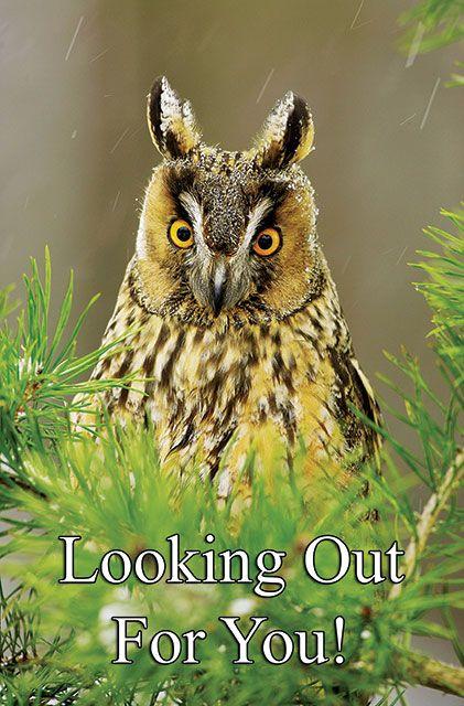 Owl Postcard http://bit.ly/y3Ac5P