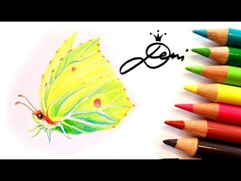 Schmetterling Zeichnen Zitronenfalter How To Draw A Brimstone