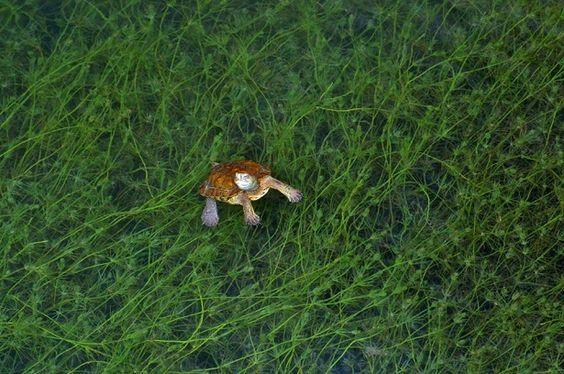 Le Rio Aguas en danger d'extinction : signez la pétition
