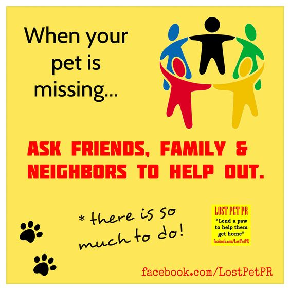 Launching a lost pet search Call your friends Recruit the family - lost pet poster