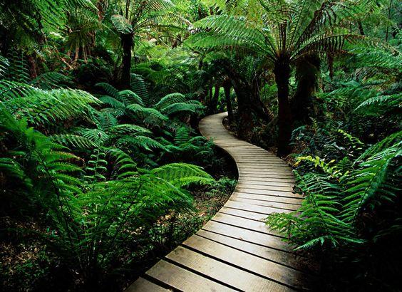 tropical path in my back yard