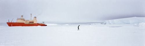 Icebreaker, Emperor penguin, Southern O., Antarctica, by Stuart Klipper - 20x200 (from $60)