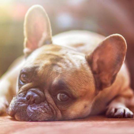 Sabia que eles não gostam que lhes olhe nos olhos? #cachorros #animais #pets #cães