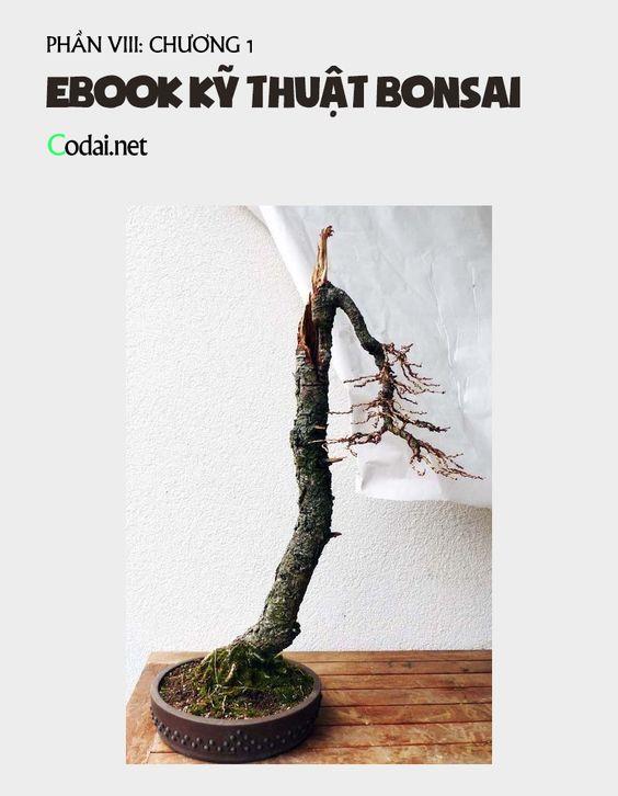 Sách Kỹ thuật Bonsai