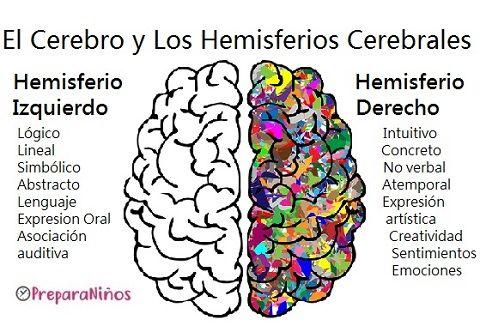 Hemisferios Cerebrales Funciones Anatomia Del Cerebro Humano Cerebro Humano Neurociencia Y Educacion