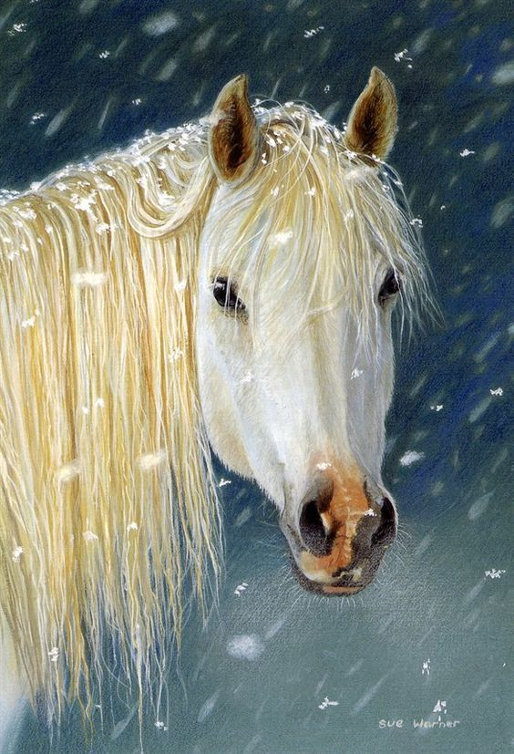 Beautiful, White horses and Snow on Pinterest
