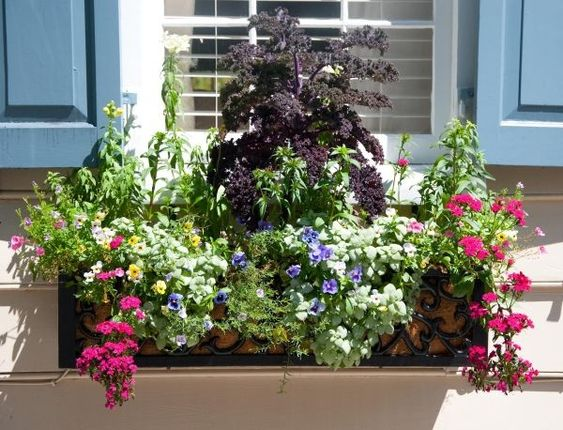 Kwiaty Balkonowe Swiatlolubne Na Balkon Poludniowy I Zachodni Artykuly Container Gardening Plants Flowers