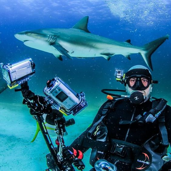 Shark Week!  via @actioncam on Instagram!