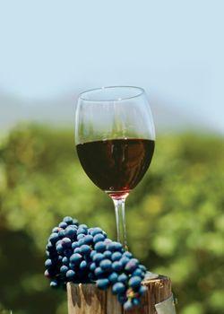 Merlot is one of my favorite wines.