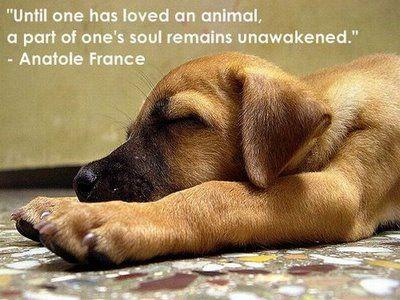 love: Animal Quote, Remains Unawakened, Dogquote, Man