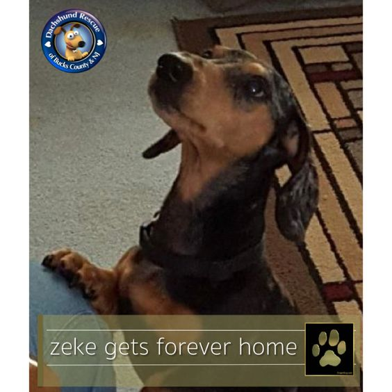We have exciting news to share today!! Zeke has earned his Gold Paw and found his forever home! We are so excited for him.