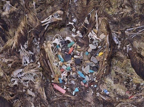 Image result for 100 Million Marine Mammals Are Mistaking Ocean Trash for Food