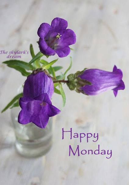 Wishing all the beautiful people created by God a Happy Monday! ❤️  Let the joy he provides to rest in your hearts!: