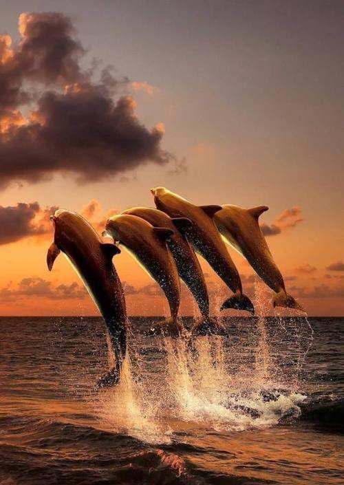 Epingle Par B Sabine Sur Beaute Fond Marin Animaux Beaux Image De Dauphin Creatures Des Oceans