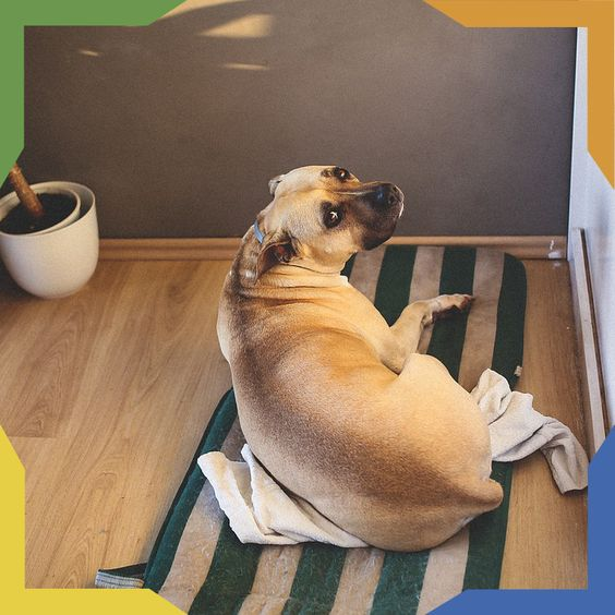Seguramente hizo algo que no te va a gustar. Los perros suelen delatarse con su comportamiento. ¿Qué travesuras ha hecho el tuyo? #PetsTips Lo primero es no regañarlo