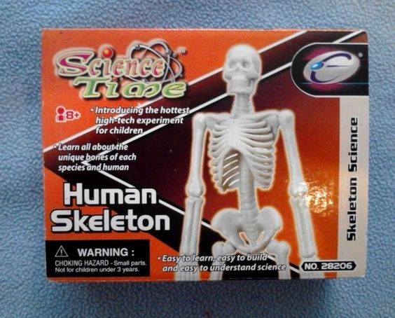 human skeleton toy model build your own educational toy homeschool, Skeleton