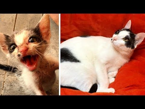 See The Amazing Transformation Of A Tiny Rescue Kitten Called Hetty Kitten Rescue Pretty Cats Kitten Meowing
