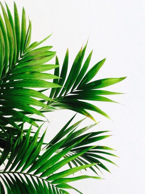 C Tree Drawing Simple Palm Tree Drawing Leaf Drawing Green Wall Decor Wedding Painting Diy Painting Graphic Palme Zeichnung Blattzeichnung Baume Zeichnen