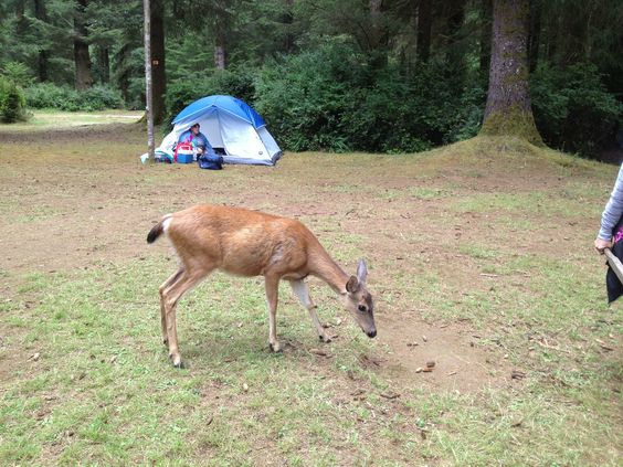Deer and other wildlife roam the camp