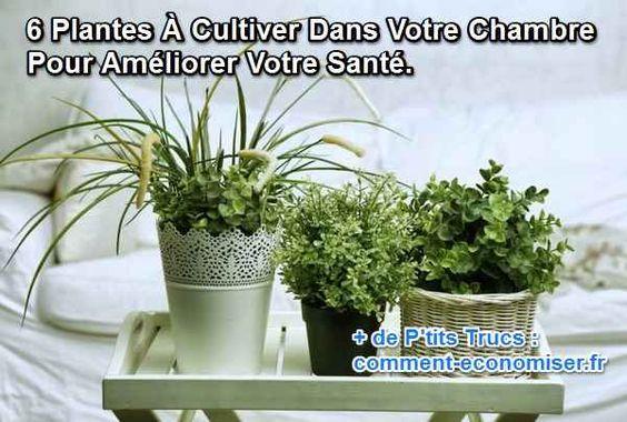 Si vous êtes à la recherche d'une option naturelle et moins chère, ces 6 plantes sont idéales pour votre maison.  Découvrez l'astuce ici : http://www.comment-economiser.fr/6-plantes-a-cultiver-dans-votre-chambre-pour-ameliorer-sante.html?utm_content=buffer466ba&utm_medium=social&utm_source=pinterest.com&utm_campaign=buffer