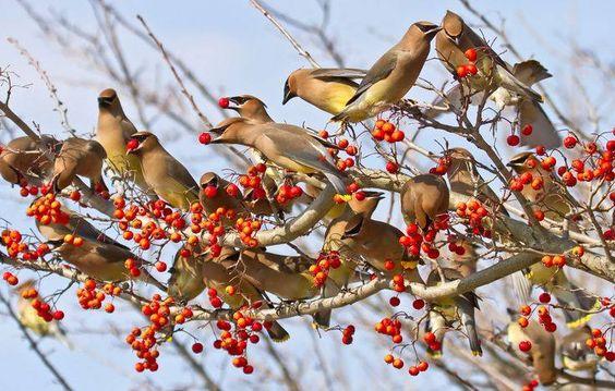 Bird Party!  by Lorraine Hudgins https://www.facebook.com/144196109068278/photos/pb.144196109068278.-2207520000.1419294377./257866817701206/?type=3&theater