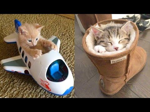 Baby Cats Cute And Funny Cat Videos Compilation 21 Aww
