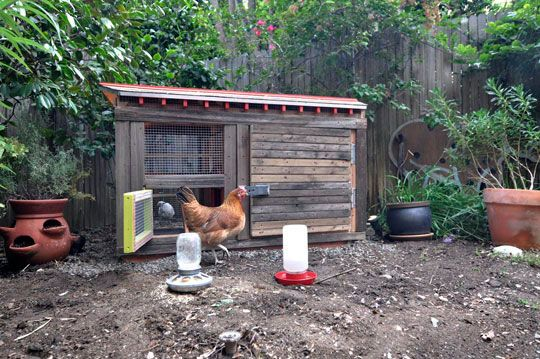 Keeping Chickens   http://www.apartmenttherapy.com/keeping-urban-chickens-170551